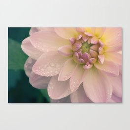 Dahlias & Raindrops, 2 Canvas Print