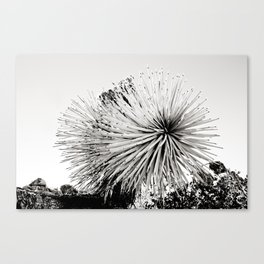Joshua Tree 08 Canvas Print