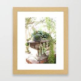 Overflowing Succulents Framed Art Print