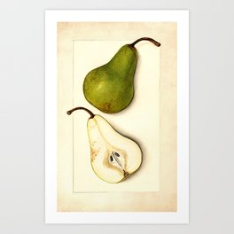Vintage Botanical Pear Art Print