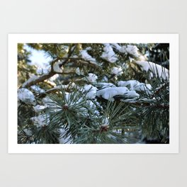 Pine Needles Art Print