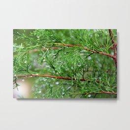 The beauty of rain  Metal Print