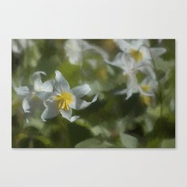 Avalanche Lily Painterly Canvas Print