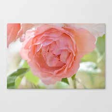 Pretty Peach Rose Canvas Print