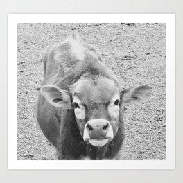 Callie the curious cow Art Print