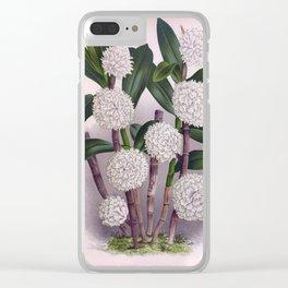 Vintage White Orchid Dendrobrium Purpurem Candidulum Lindenia Collection Clear iPhone Case