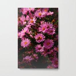 Wild Chrysanthemum Metal Print