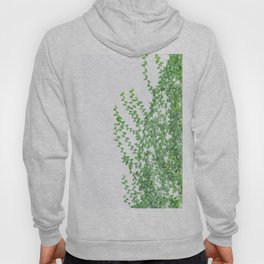 Green creepers climbing the wall Hoody
