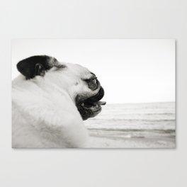 Pug Life | Reflecting at the Beach Canvas Print