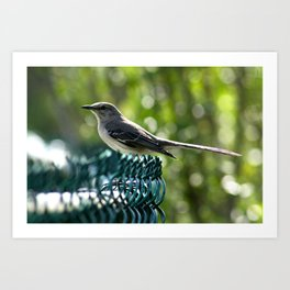 Bird Perched  Art Print
