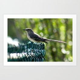 Bird Perched  Art Print