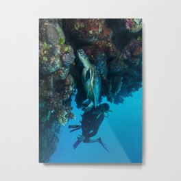 Green Sea Turtle on the Great Garrier Reef Metal Print