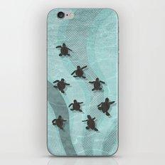 Loggerhead sea turtle hatchlings iPhone & iPod Skin