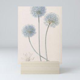 Flower 051 allium coeruleum Blue Leek23 Mini Art Print