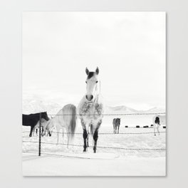 Winter Horse Landscape Canvas Print