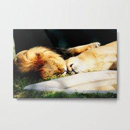 Cat Nap (Jungle Love) Metal Print