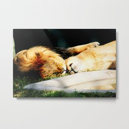 Cat Nap (Jungle Love) Metal Print