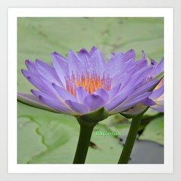 Blue Water Lilies in Hangzhou Art Print