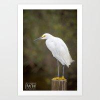 Louisiana Egret Art Print
