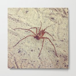 Young Cane Spider Metal Print