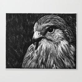 Mister Aigle Canvas Print