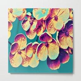Hydrangea Blossoms Metal Print
