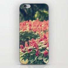 In red iPhone & iPod Skin