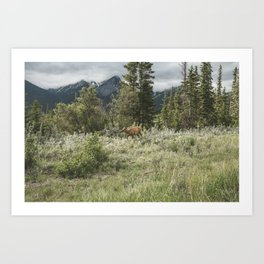 Alberta Wilderness Landscape Photograhy | Elk | Wildlife | Animal Art Print