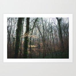 Dahlonega Woods II Art Print