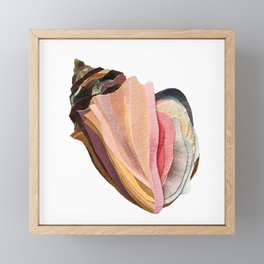 Conch Shell Framed Mini Art Print