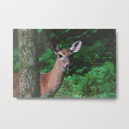 Forest Deer XV Metal Print
