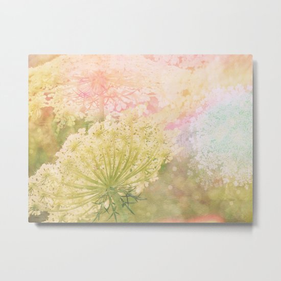 Princess Anne's Lace Metal Print