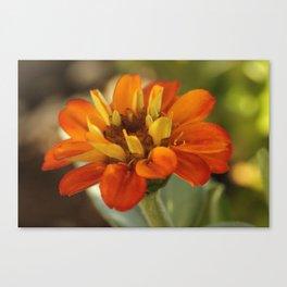 Marigold Flower Canvas Print