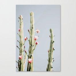 Cereus Cactus Blush Canvas Print