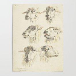 Vintage Sheep Illustration, 1800 Poster