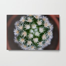 Cactus Close Up Metal Print