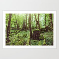 Mossy Forest Art Print