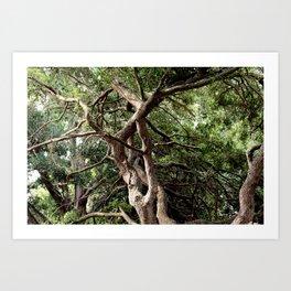 Twisting Trees Art Print