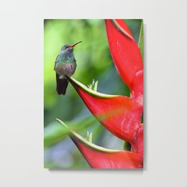 Hummingbird After Rain Metal Print