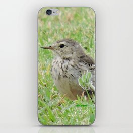 Pipit on the Lawn iPhone Skin