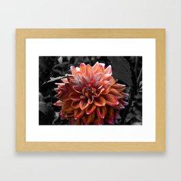 Dalhia in Grayscale Framed Art Print