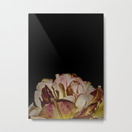 Bright Pink Tulip On Black Metal Print