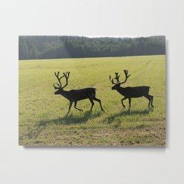 Reindeers on  green swedish fjeld Metal Print