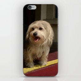 Storefront Dog iPhone Skin