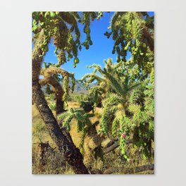 Spikes and Spines Canvas Print