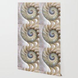 Nautilus Shell Wallpaper