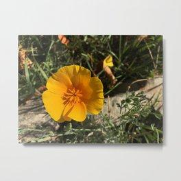 Meadow Wildflower Metal Print