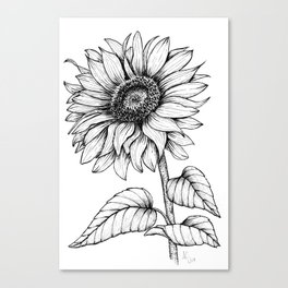 Giant Sunflower in Black Ink on White Background Canvas Print