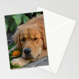 Charlie Boy Stationery Cards