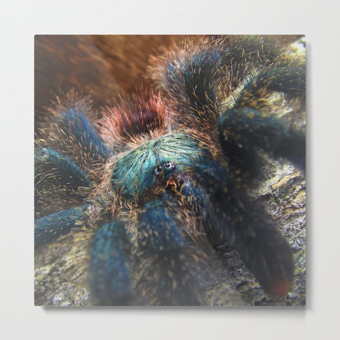 Greenbottle Blue Tarantula Metal Print